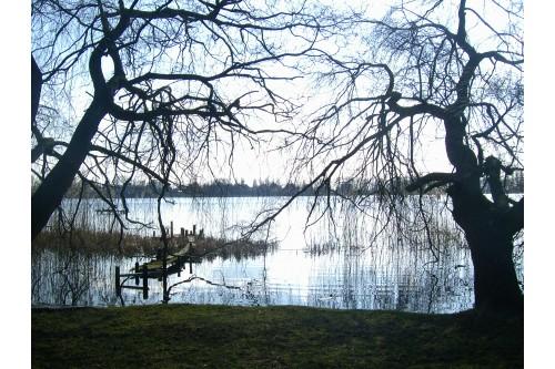 Jezioro&Drzewa