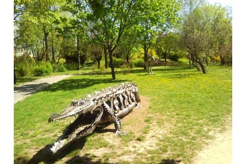 Krokodyl na Osiedlu Konopnicki
