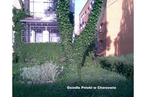 Osiedle Pnioki